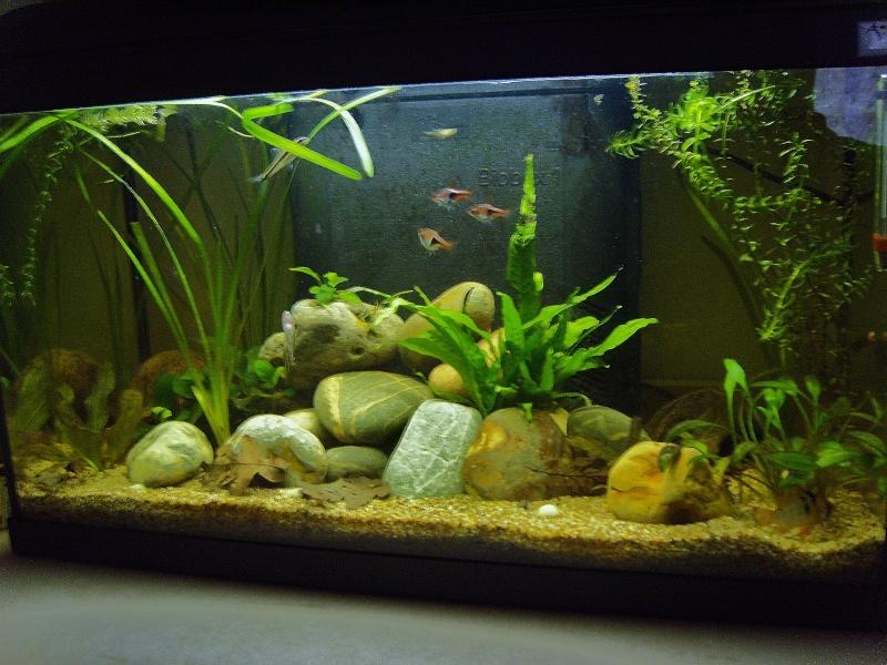 Nouveau aqua 54l for Acheter poisson rouge 77