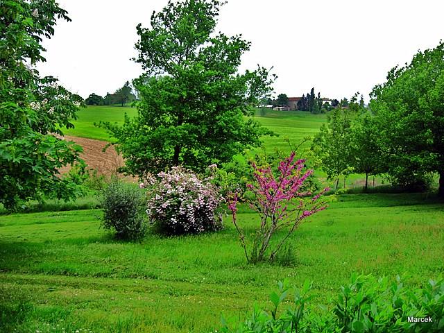 Un arbuste fleurs merveilleux le kolkwitzia fleurs for Arbuste de jardin