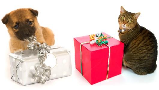 Emballage cadeau gratuit GUEULE D'AMOUR