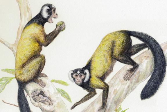 L'origine de la lignée commune entre les hommes et les singes se trouverait en Asie