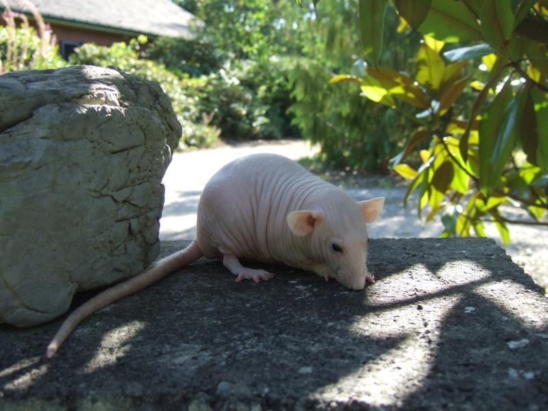 rats_130.jpg
