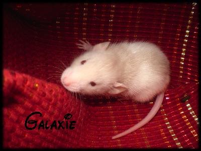 galxie11.jpg