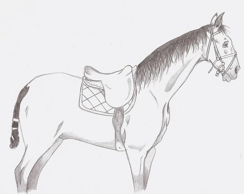 Dessins chevaux - Dessin de chevaux sauvage ...