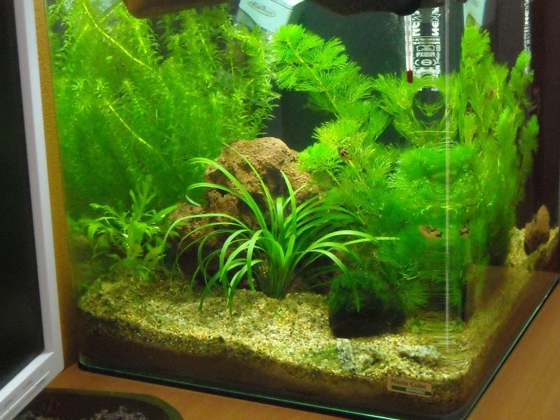 Mon 30 l sp cifique t traodons nains for Poisson aquarium 30l