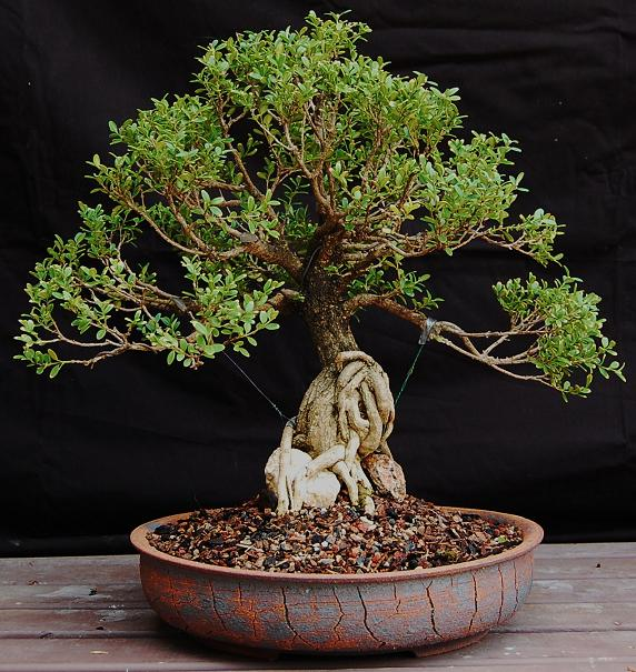 Bonsai some pots for the new gallery page 6