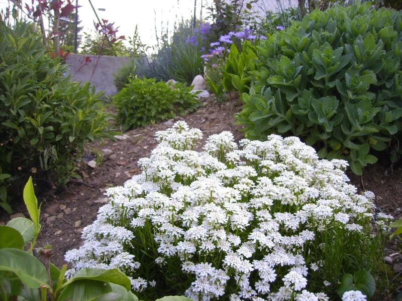 Les plantes vivaces de mon jardin for Jardin plantes vivaces