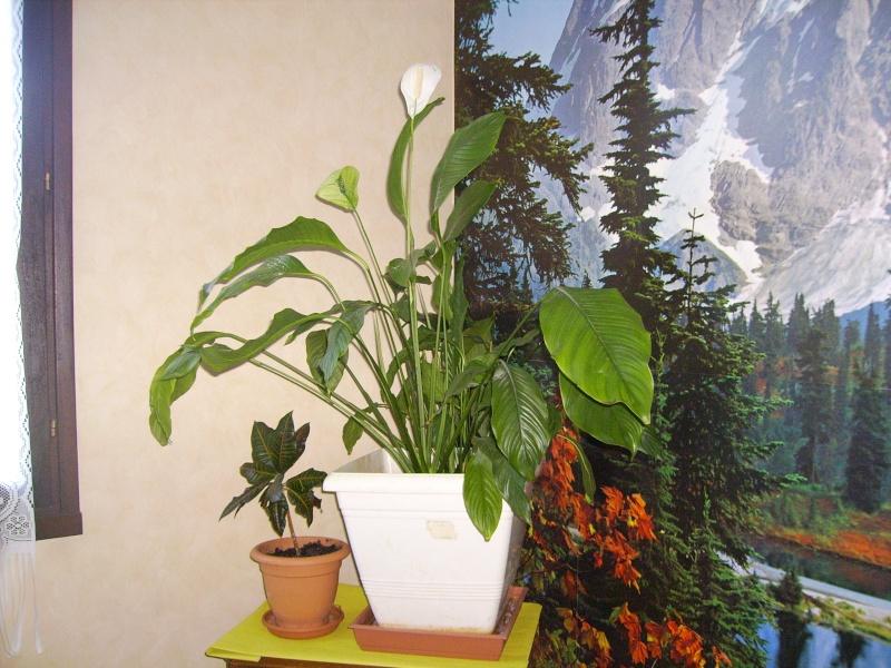 Mes plantes vertes for Recherche sur les plantes vertes