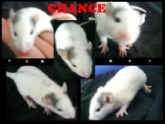 chance11.jpg