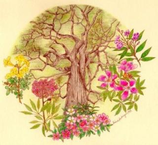 Conhecer as Plantas