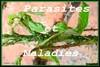 Parasites et maladies des plantes nourricières