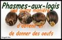Phasmes-Aux-Logis
