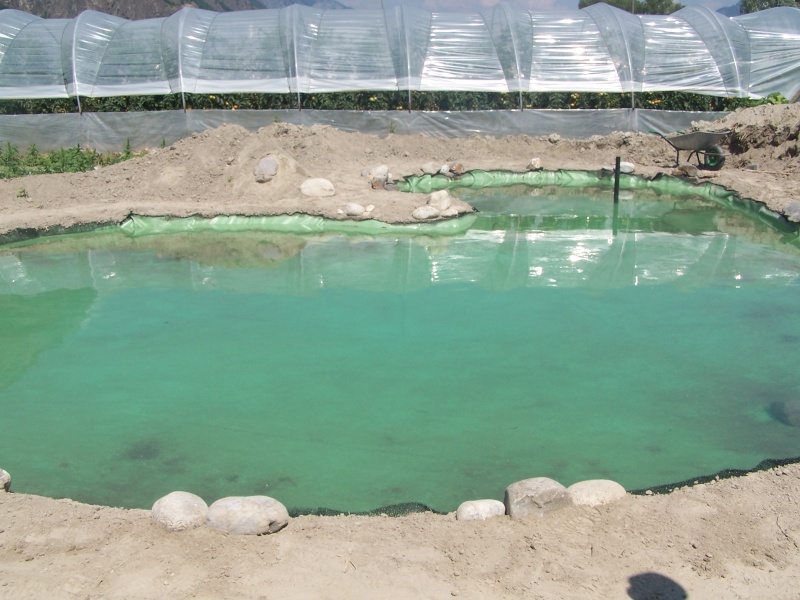 Mes nouvelles installations - Bassin canard d ornement pau ...