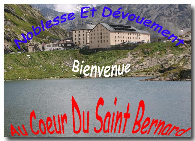 Au Coeur Du Saint Bernard