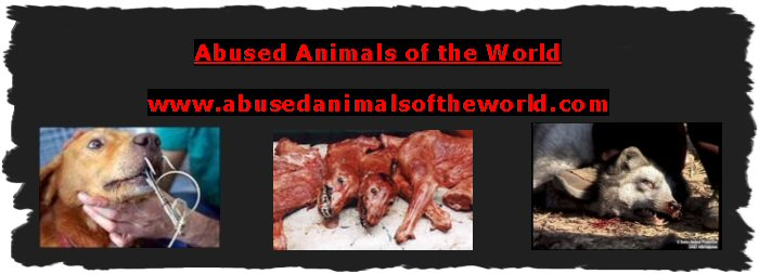 ABUSED ANIMALS OF THE WORLD