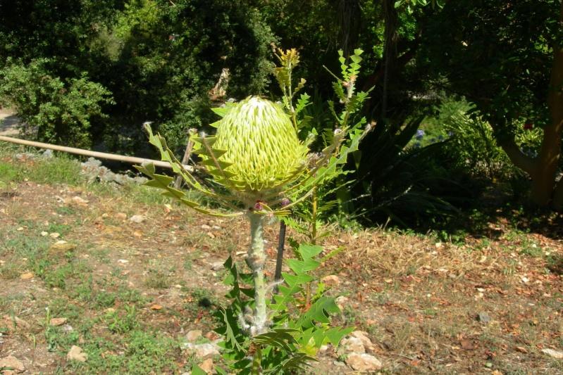 06160 antibes jardin botanique de la villa thuret au for Jardin villa thuret