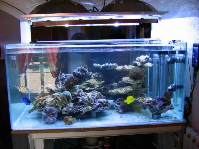 Bac recifal 1000 litres de becane for Aquarium 200 litres