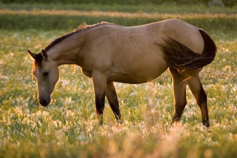 Equustrian