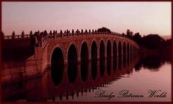 bridgebeetweenworlds