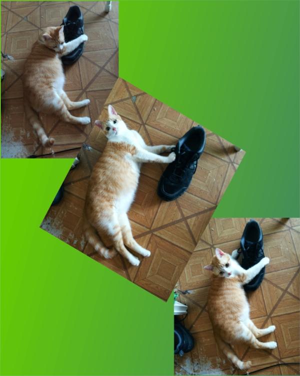shoe-v11.jpg