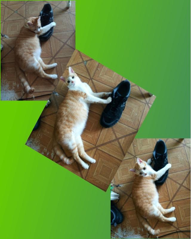 shoe-v12.jpg